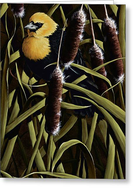 Yellow Headed Blackbird And Cattails Greeting Card by Rick Bainbridge