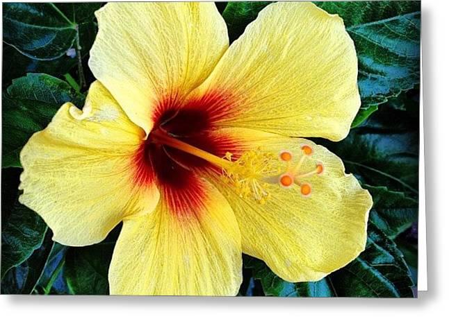 Yellow Hibiscus 2 Greeting Card by Darice Machel McGuire