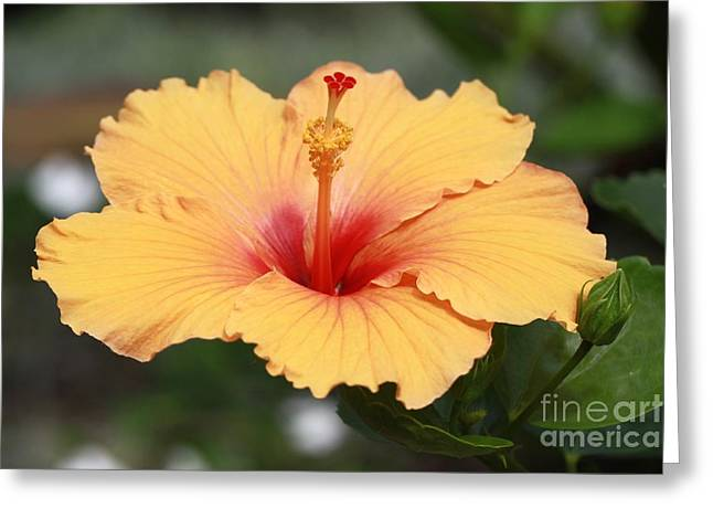 Yellow Hibiscus All Profits Go To Hospice Of The Calumet Area Greeting Card