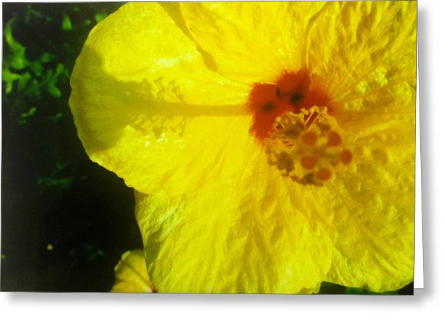 Greeting Card featuring the photograph Yellow Hibiscus by Alohi Fujimoto