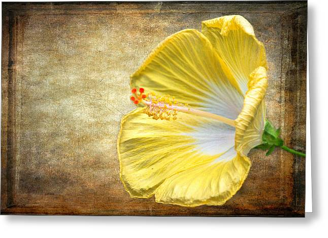 Greeting Card featuring the photograph Yellow Hibiscus by Garvin Hunter
