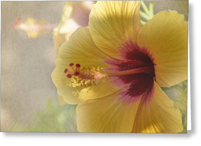 Yellow Hibiscus Greeting Card by Peggy Hughes