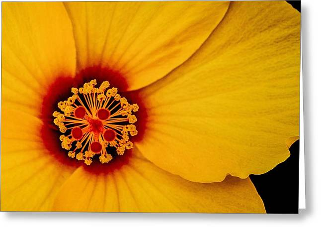 Greeting Card featuring the photograph Yellow Hibuscus Too Squared by TK Goforth