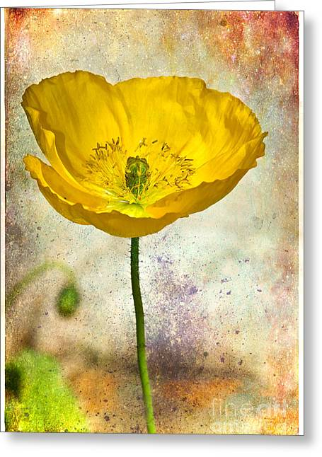 Yellow Icelandic Poppy And Texture Greeting Card