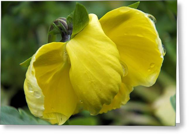 Greeting Card featuring the photograph Yellow In Rain by Gene Cyr
