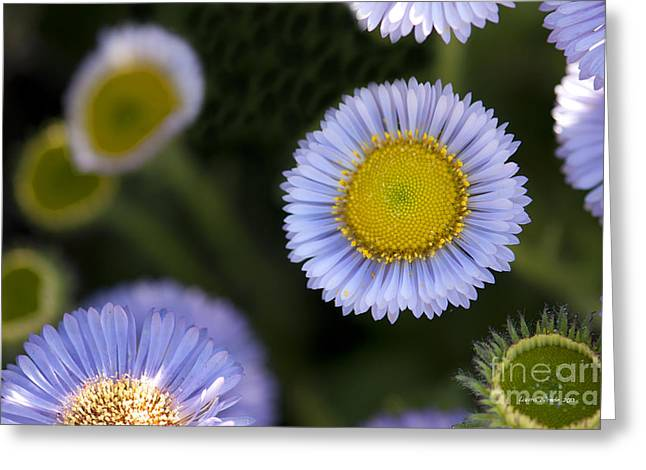 Yellow In The Middle Greeting Card by Artist and Photographer Laura Wrede