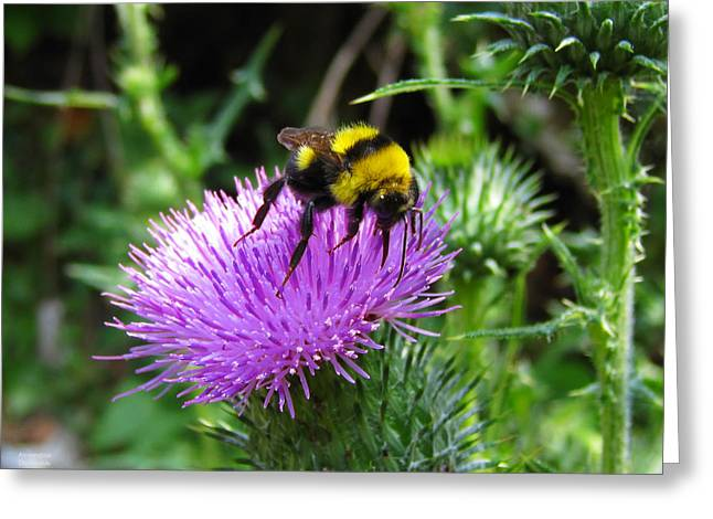 Yellow Insect On A Thistle Greeting Card by Alexandros Daskalakis