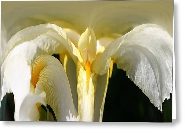 Yellow Iris 102 Greeting Card