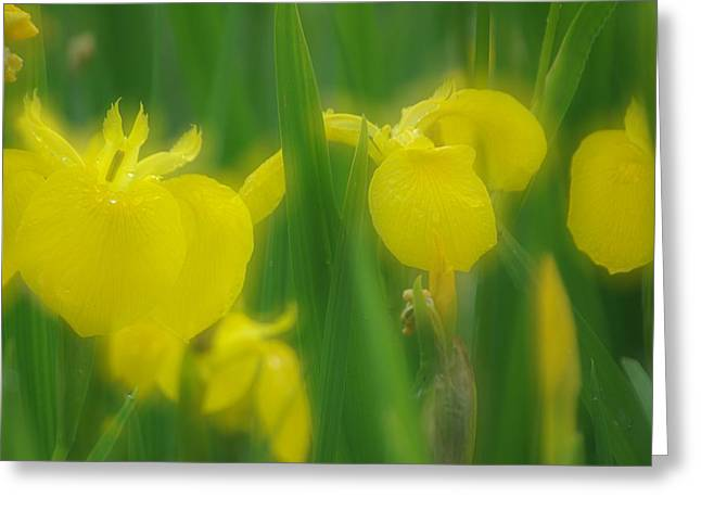 Yellow Iris Double Greeting Card