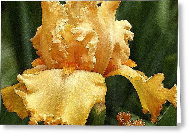 Yellow Iris Greeting Card by Susan Crossman Buscho