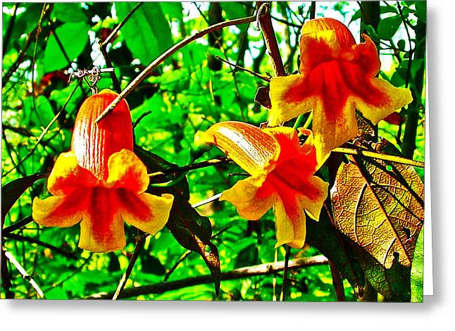 Yellow Jessamine On Natchez Trace Parkway-tennessee  Greeting Card by Ruth Hager
