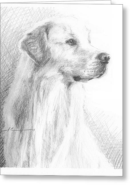 Yellow Labrador Show Dog Pencil Portrait Greeting Card by Mike Theuer