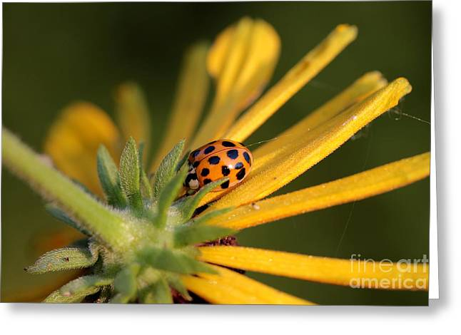 Greeting Card featuring the photograph Yellow Lady - 2 by Kenny Glotfelty