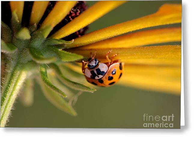 Greeting Card featuring the photograph Yellow Lady - 3 by Kenny Glotfelty
