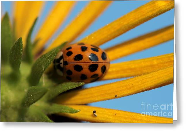 Greeting Card featuring the photograph Yellow Lady Bug - 5 by Kenny Glotfelty