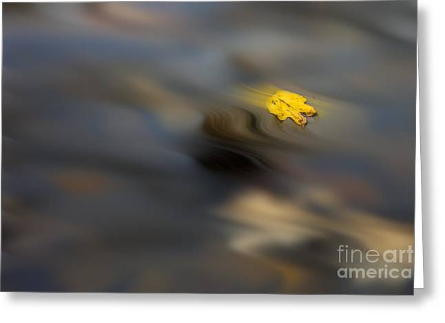 Yellow Leaf Floating In Water Greeting Card by Dan Friend