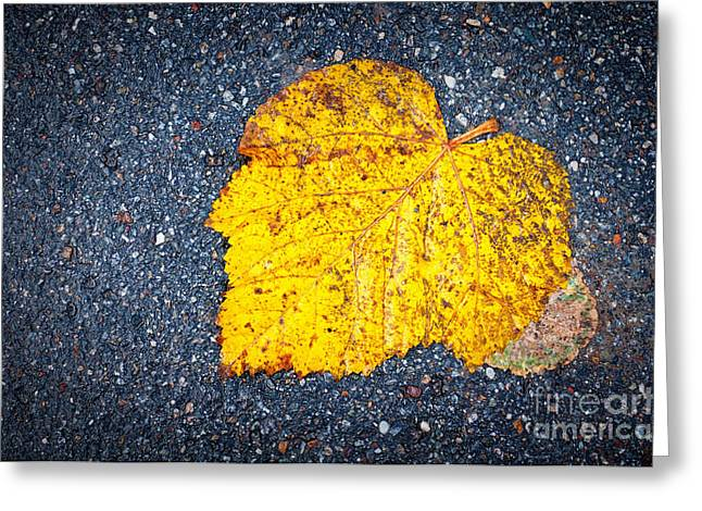 Yellow Leaf On Ground Greeting Card by Silvia Ganora