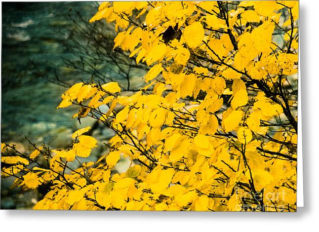 Yellow Leaves By The Water Greeting Card