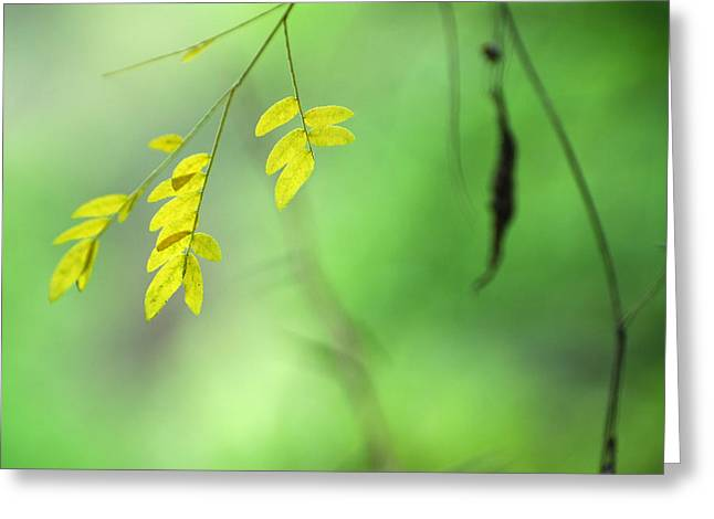 Yellow Leaves Greeting Card by Guido Montanes Castillo