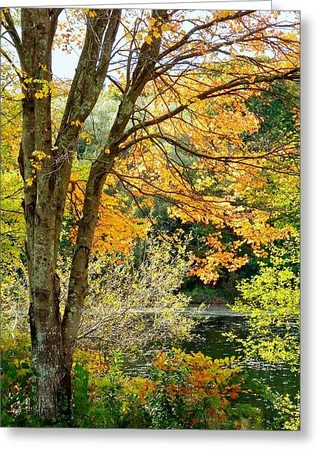Greeting Card featuring the photograph Yellow Leaves by Janice Drew