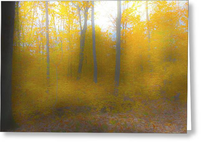 Yellow Leaves Greeting Card by Jim Baker