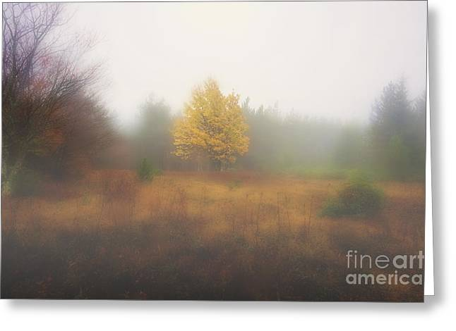 Yellow Leaves Of Tree In Fog At Dolly Sods Greeting Card by Dan Friend