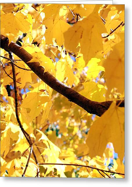 Yellow Leaves Greeting Card by Valentino Visentini