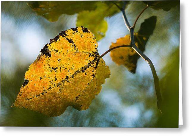 Yellow Light - Featured 3 Greeting Card by Alexander Senin