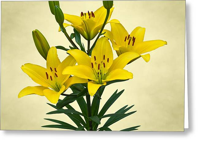 Yellow Lilies Greeting Card by Jane McIlroy