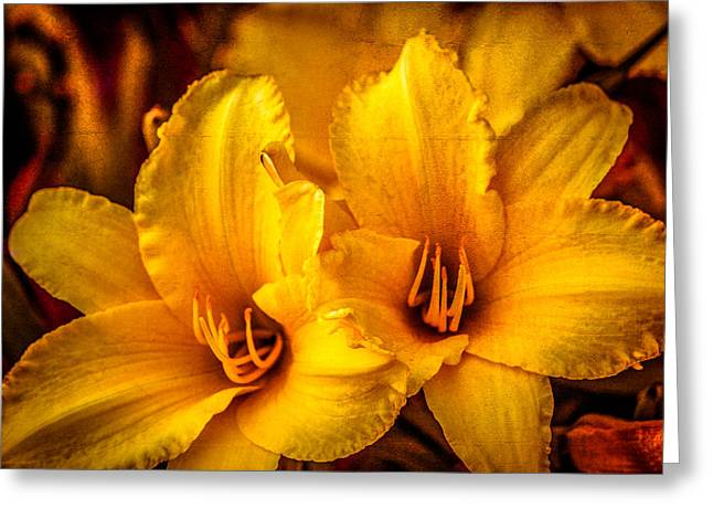 Yellow Lillies Greeting Card