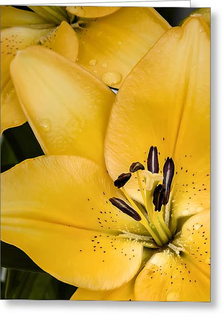 Yellow Lily Greeting Card by Scott Norris