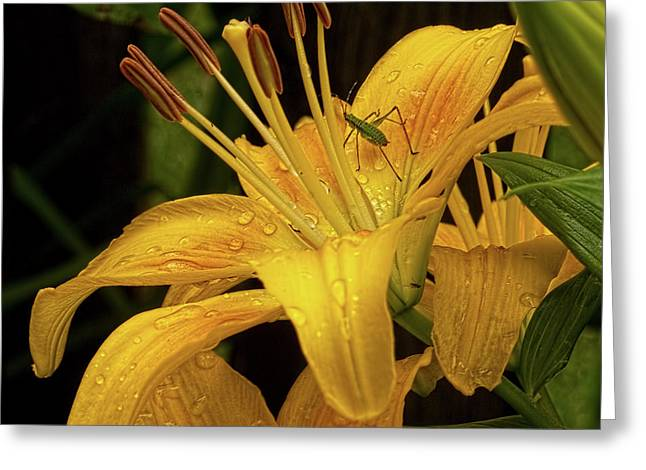 Greeting Card featuring the photograph Yellow Lily With Bug by Michael Flood