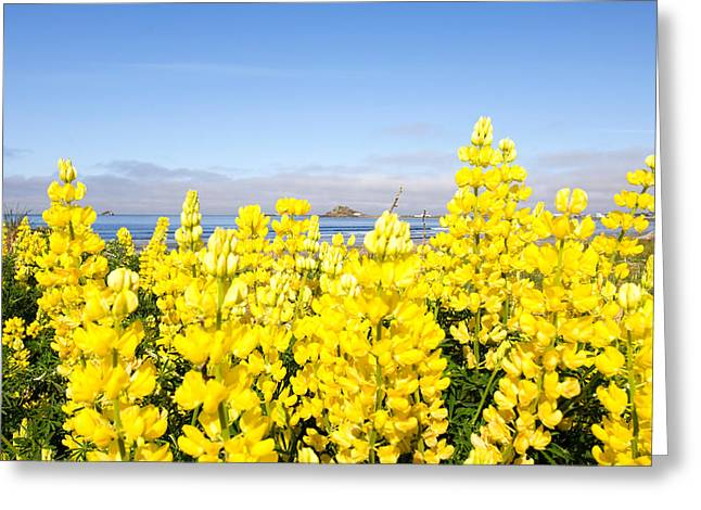 Yellow Lupines In A Field, Del Norte Greeting Card by Panoramic Images