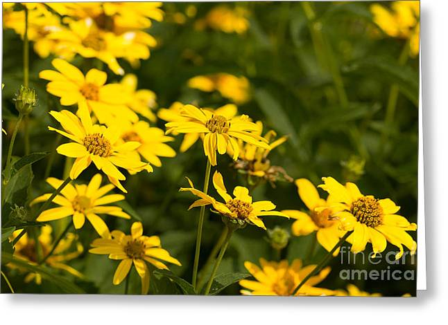 Yellow Greeting Card by Lynne Dohner