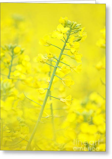 Yellow Makes Me Happy Greeting Card by Angela Doelling AD DESIGN Photo and PhotoArt