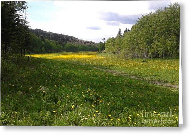 Yellow Meadow Greeting Card