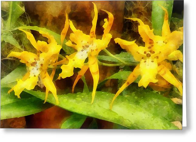 Yellow Miltassia Orchids Greeting Card by Susan Savad