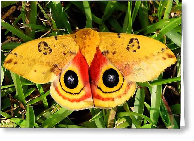 Yellow Moth Greeting Card