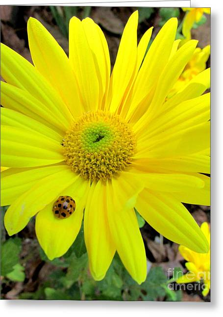 Yellow Mum And Visitor Greeting Card by Nancy Rucker