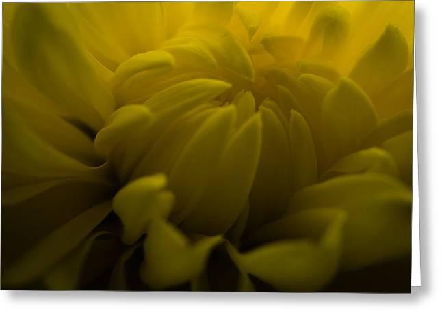 Yellow Mum Greeting Card