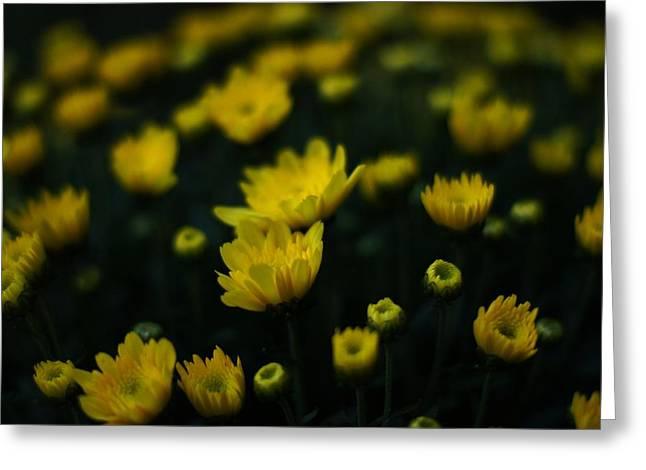 Yellow Mums Greeting Card by Doug Hubbard