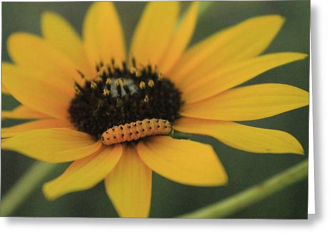 Greeting Card featuring the photograph Yellow On Yellow by Alicia Knust