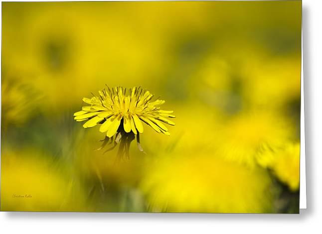 Yellow On Yellow Dandelion Greeting Card