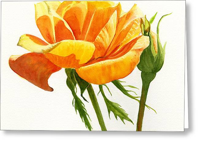 Yellow Orange Rose With Bud On White Greeting Card