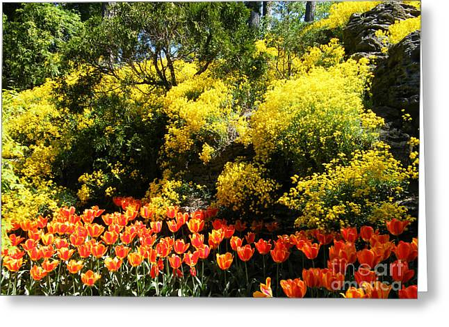 Greeting Card featuring the photograph Yellow Orange - Springtime by Phil Banks