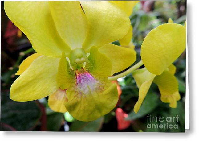 Greeting Card featuring the photograph Yellow Orchid by Kristine Merc