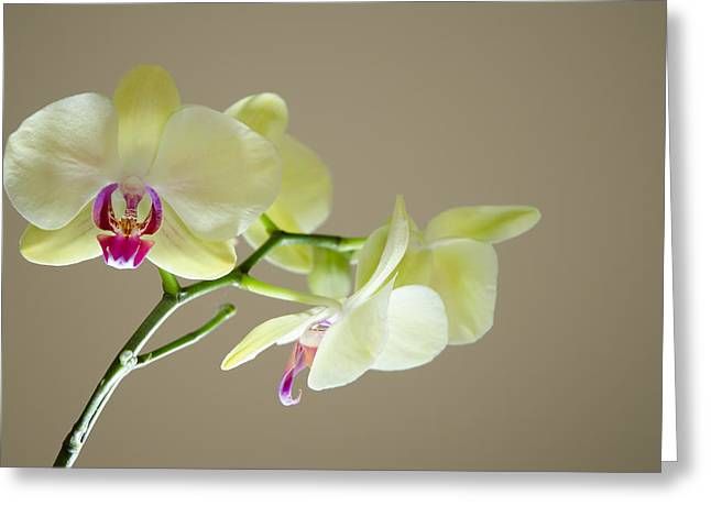 Yellow Orchids Greeting Card by Ben Spencer
