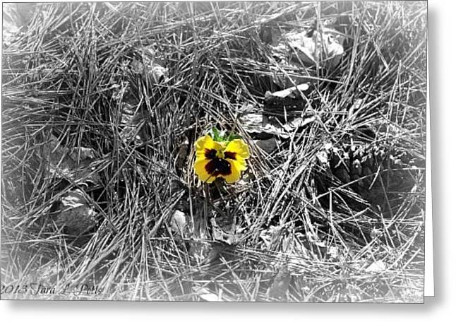 Greeting Card featuring the photograph Yellow Pansy by Tara Potts