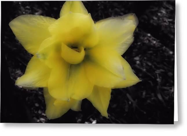 Yellow Parrot Tulip Greeting Card