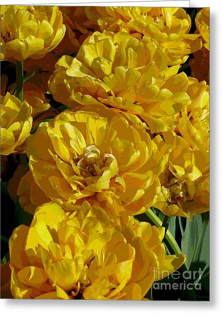 Yellow Peony Tulips Greeting Card by Betsy Cotton